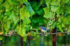 Doyle's Vineyard