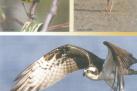 NC Birding Trail - Jordan Lake sites